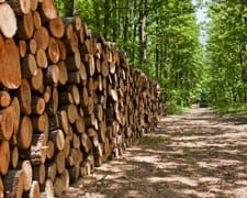 forestry investment The Forestry Company Ireland Forestry Services