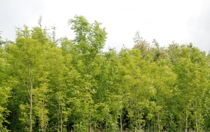 The Forestry Company Ireland Forestry Services