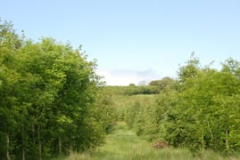forestry planting