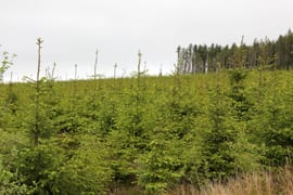 forestry investment